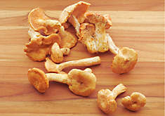 Hedgehog Mushrooms