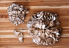 Fresh Organic Maitake (Hen of the Woods) Mushrooms