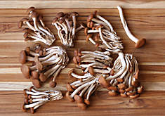 Fresh Organic Velvet Pioppini Mushrooms