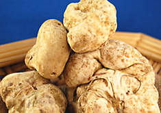 White Truffles: The Diamond of the Kitchen