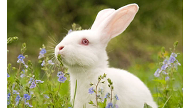 Rabbit: The Basics - Our Products – Dartagnan.com